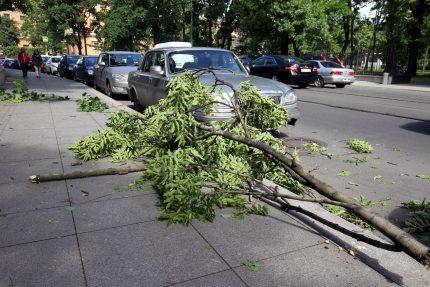 падение дерева ветки ветер погода ураган