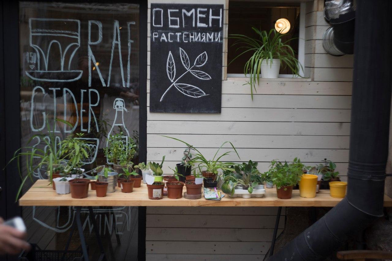 """фото из сообщества """"Бесплатный обмен растениями в """"Тайге"""" (ВКонтакте)"""
