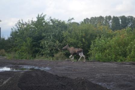 фото предоставлено комитетом по природопользованию