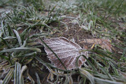 иней листья погода заморозки холода