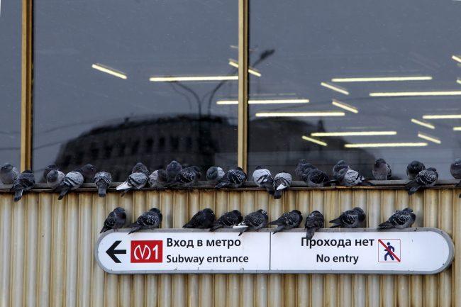 голуби холод погода станция метро политехническая