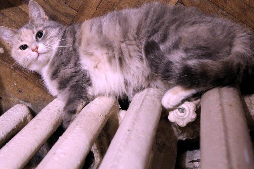 кошка батарея тепло отопление