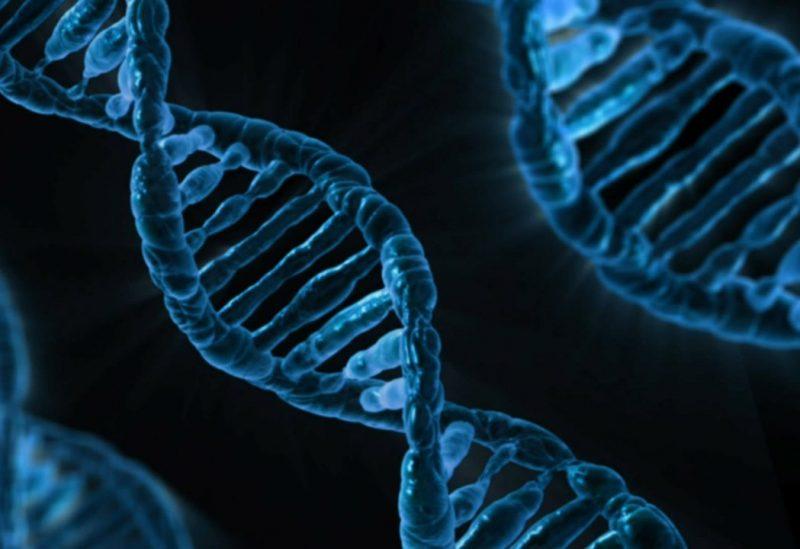 днк гены геном биология наука