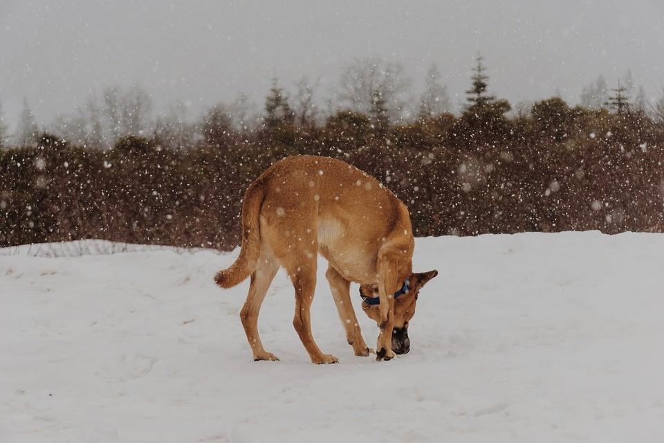 собака поиск зима снег пес