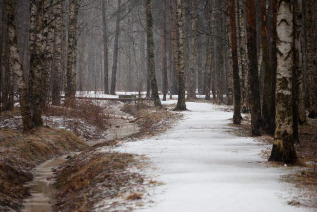 неудачные места для свиданий парк лес ручей