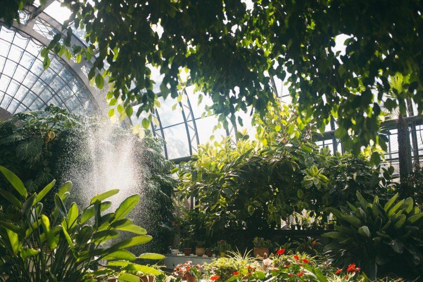 оранжереи Таврического сада