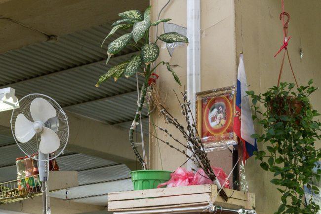 сытный рынок цветок растение