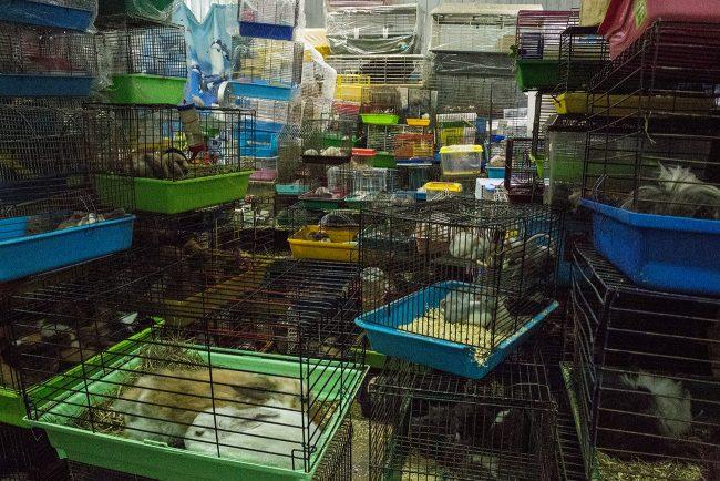 полюстровский рынок мыши грызуны