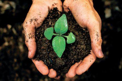 экология зелень цветок жизнь земля руки посадка сад огород