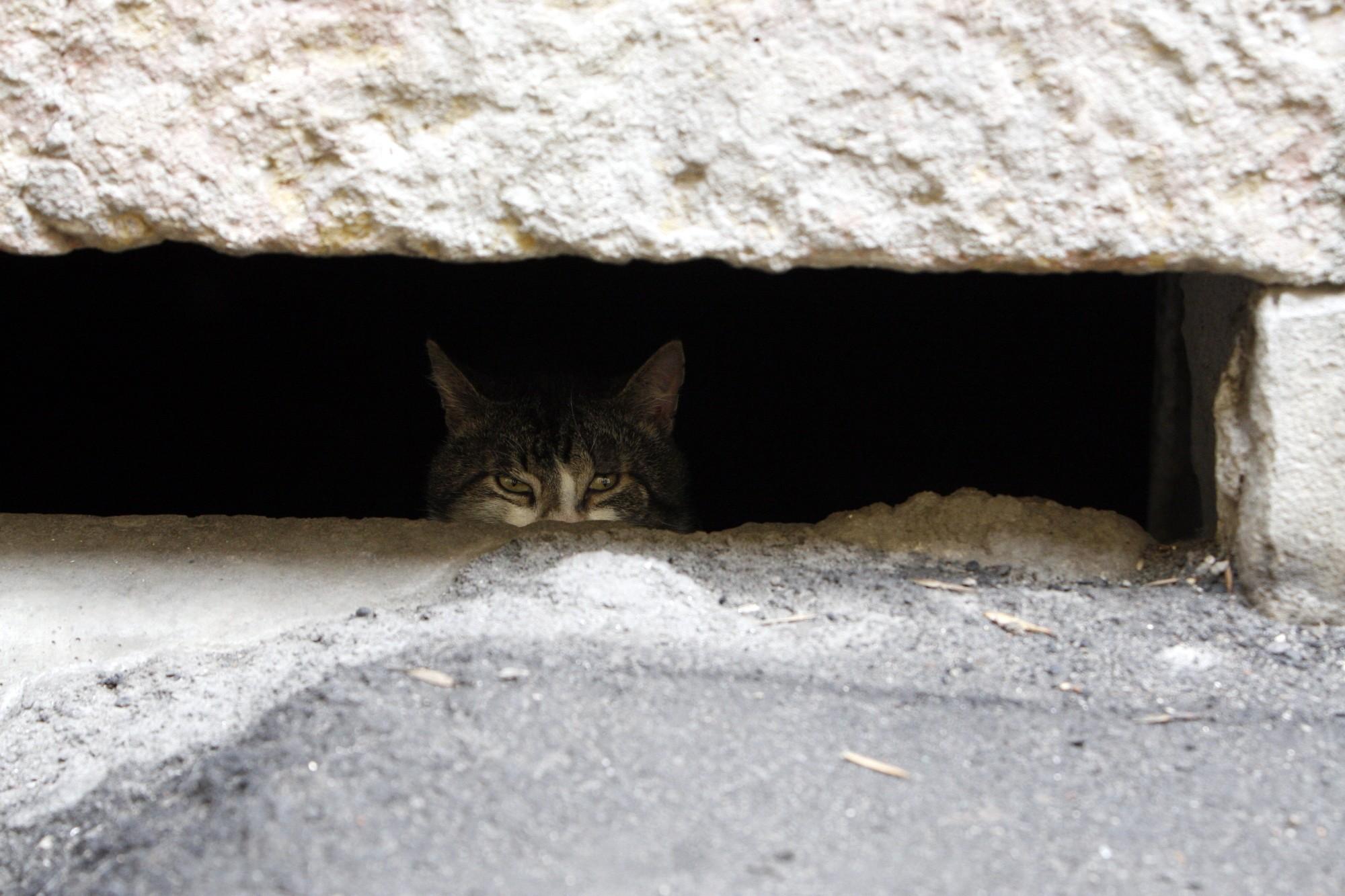 бездомная кошка кот домашнее животное подвал