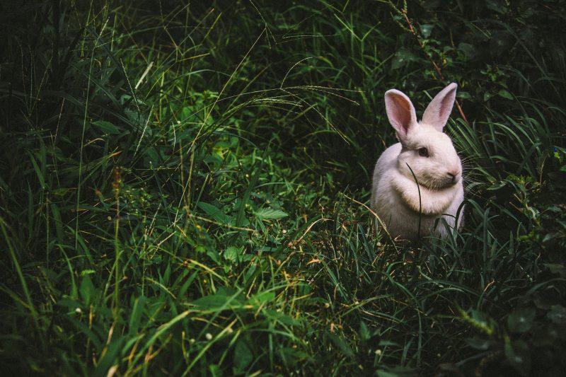 кролик, животные, кролики