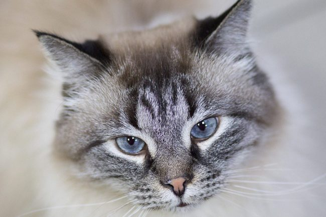 Лучезар_1 кот кошка