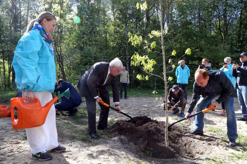 Всероссийский день посадки леса деревья губернатор Георгий Полтавченко