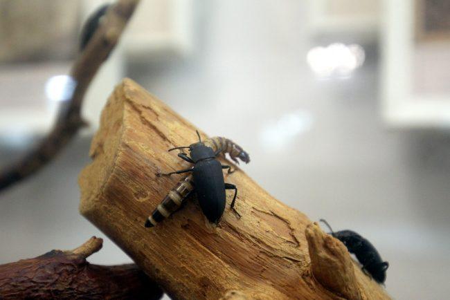 Ночь музеев 2018 музей почвоведения жуки чернотелки насекомые личинки
