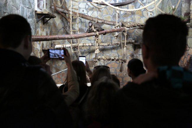 Ночь музеев 2018 зоопарк обезьяны приматы