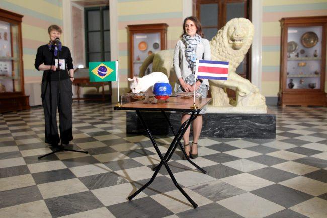 Эрмитажный кот Ахилл предсказание ЧМ-2018 матч Бразилия Коста-Рика