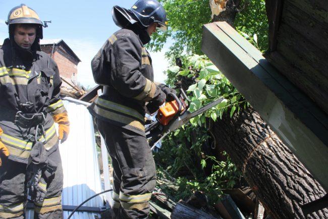 пожарные спасатели упавшее дерево