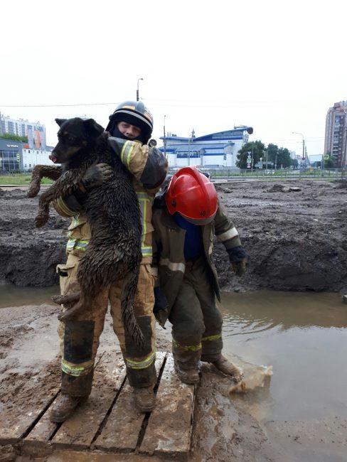 собака спасатели пожарные пёс