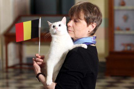 ЧМ-2018 футбол эрмитажный кот Ахилл предсказание результатов матча Франция - Бельгия