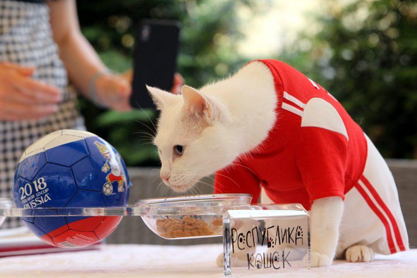 эрмитажный кот Ахилл