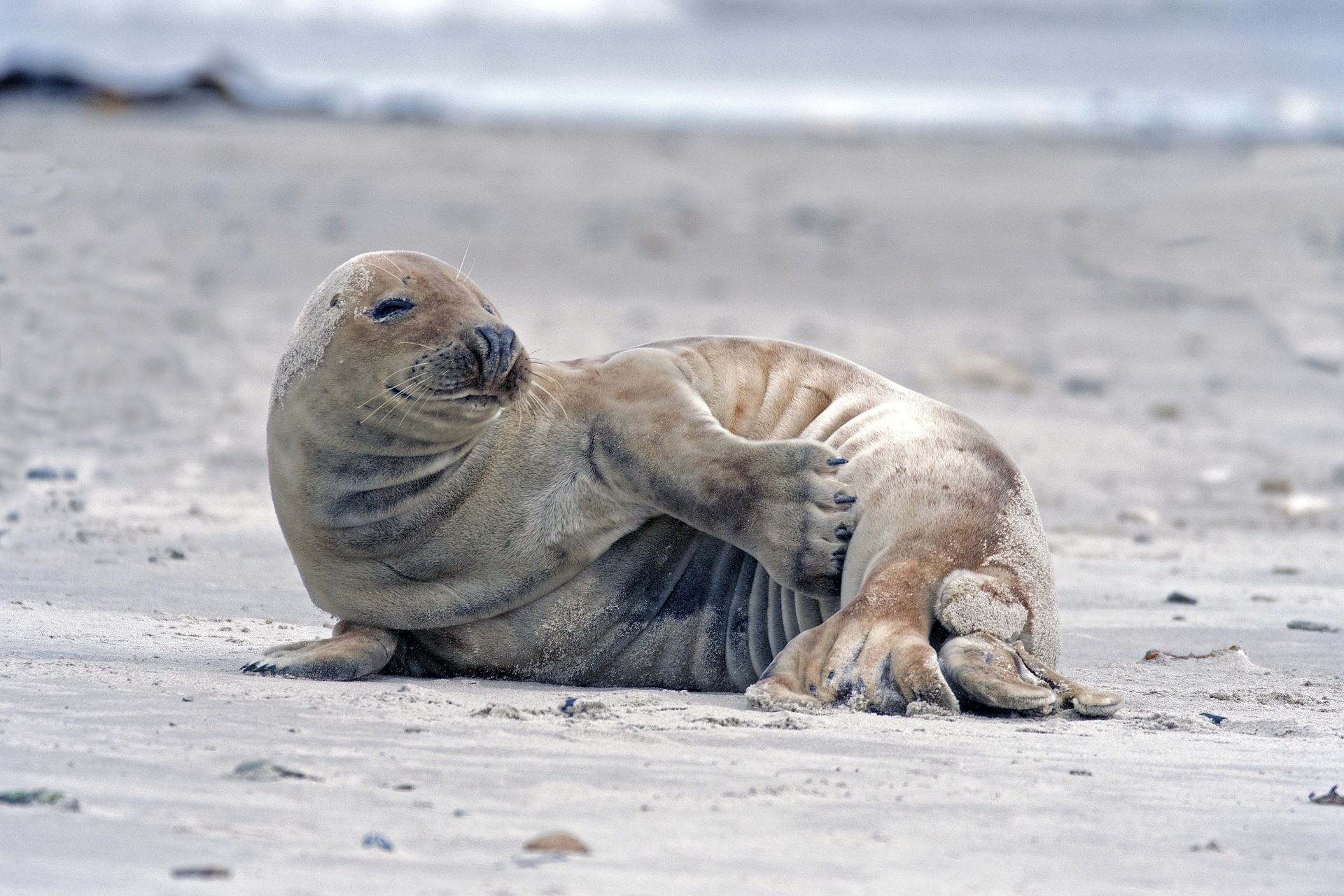 Прикольные картинки с тюленями, картинка лекарства авиационные