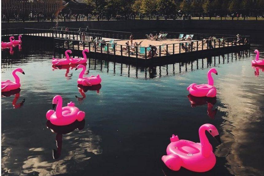 Фламинго, Новая Голландия