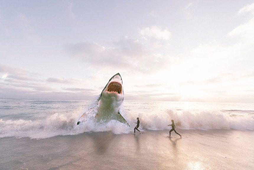 акула море пляж океан люди туристы туризм