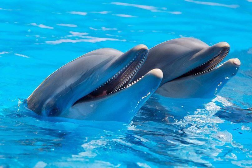 дельфины вода дельфинарий бассейн