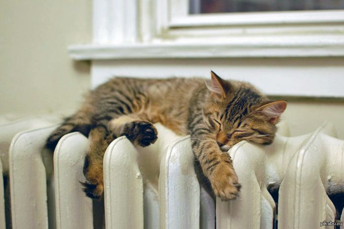 кот батарея отопление тепло зима