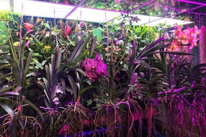 орхидея ванда растения цветы ленинградский зоопарк