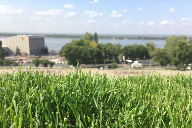 трава самара набережная волга река