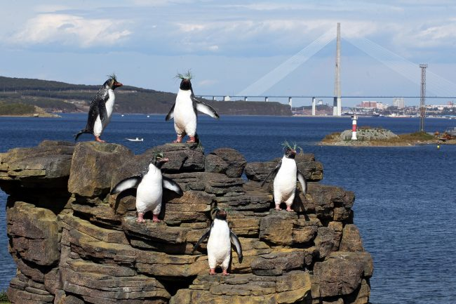 Владивосток Босфор восточный Русский мост пингвины
