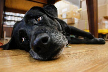 пес, собака, черный пес, животные
