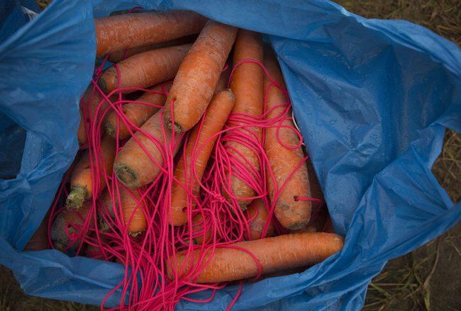 морковь альпинистский горный кросс «не Мартовский заяц» спорт бег