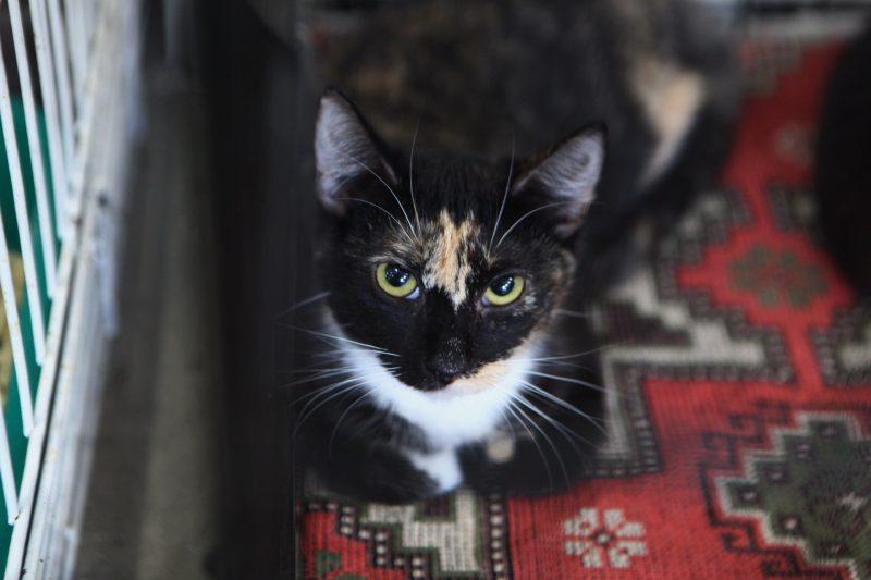 выставка-раздача, бездомные животные, животные из приютов, кот, котики