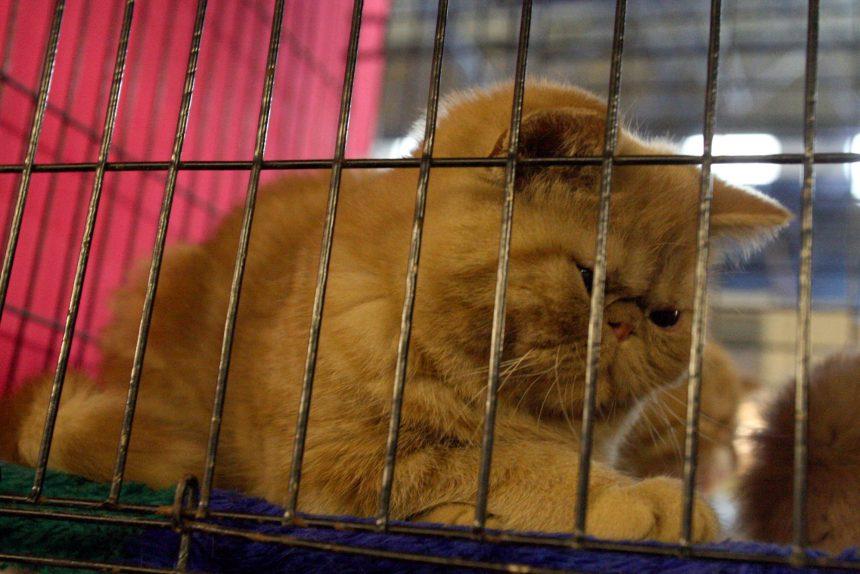 кошка клетка переноска домашние животные