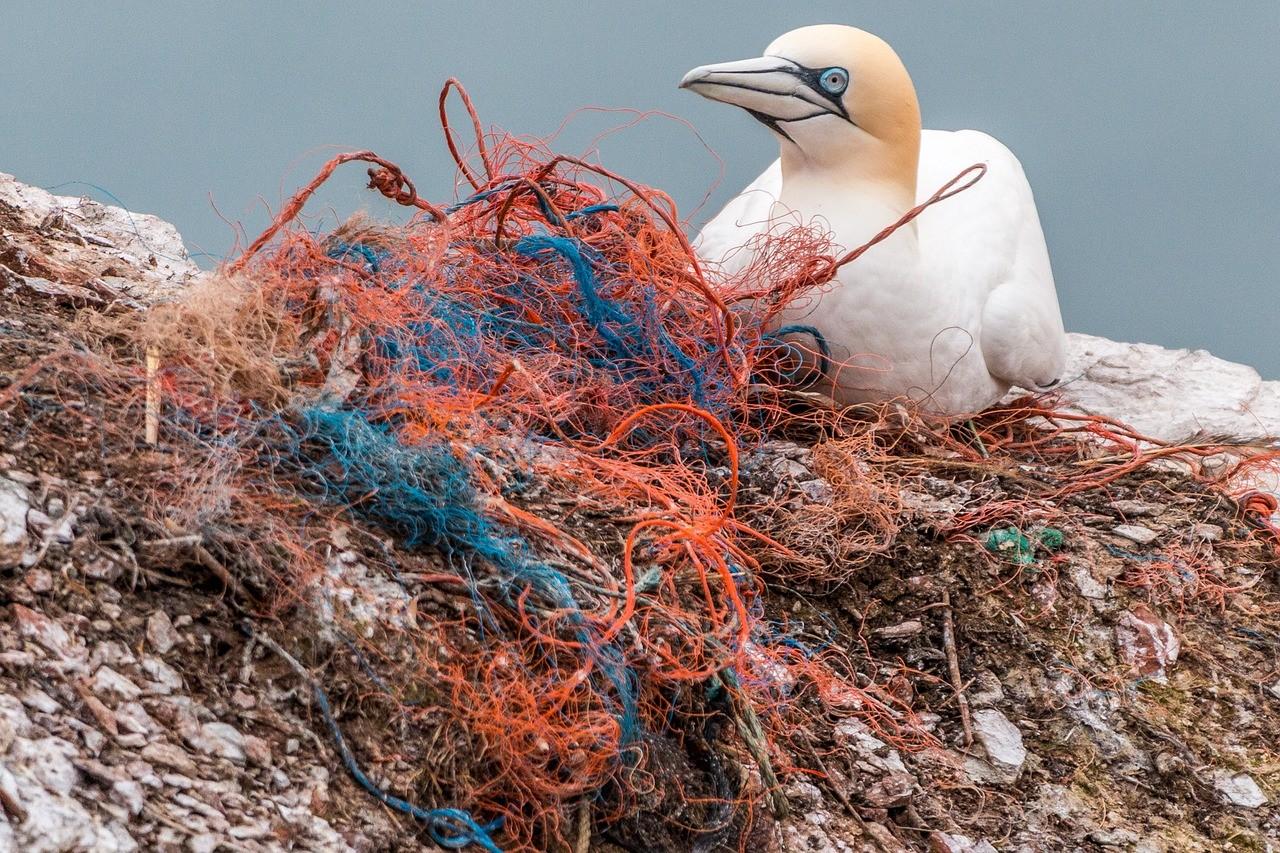 птица пластмассовая сетка загрязнение мусор экология