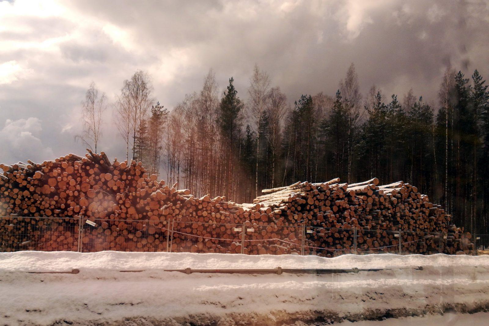 вырубка леса ОЭЗ Новоорловская