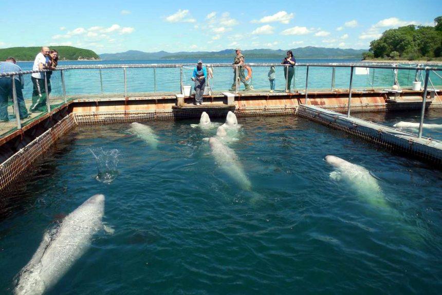 китовая тюрьма