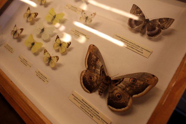 дом музей Набокова Большая Морская 47 бабочки насекомые коллекция