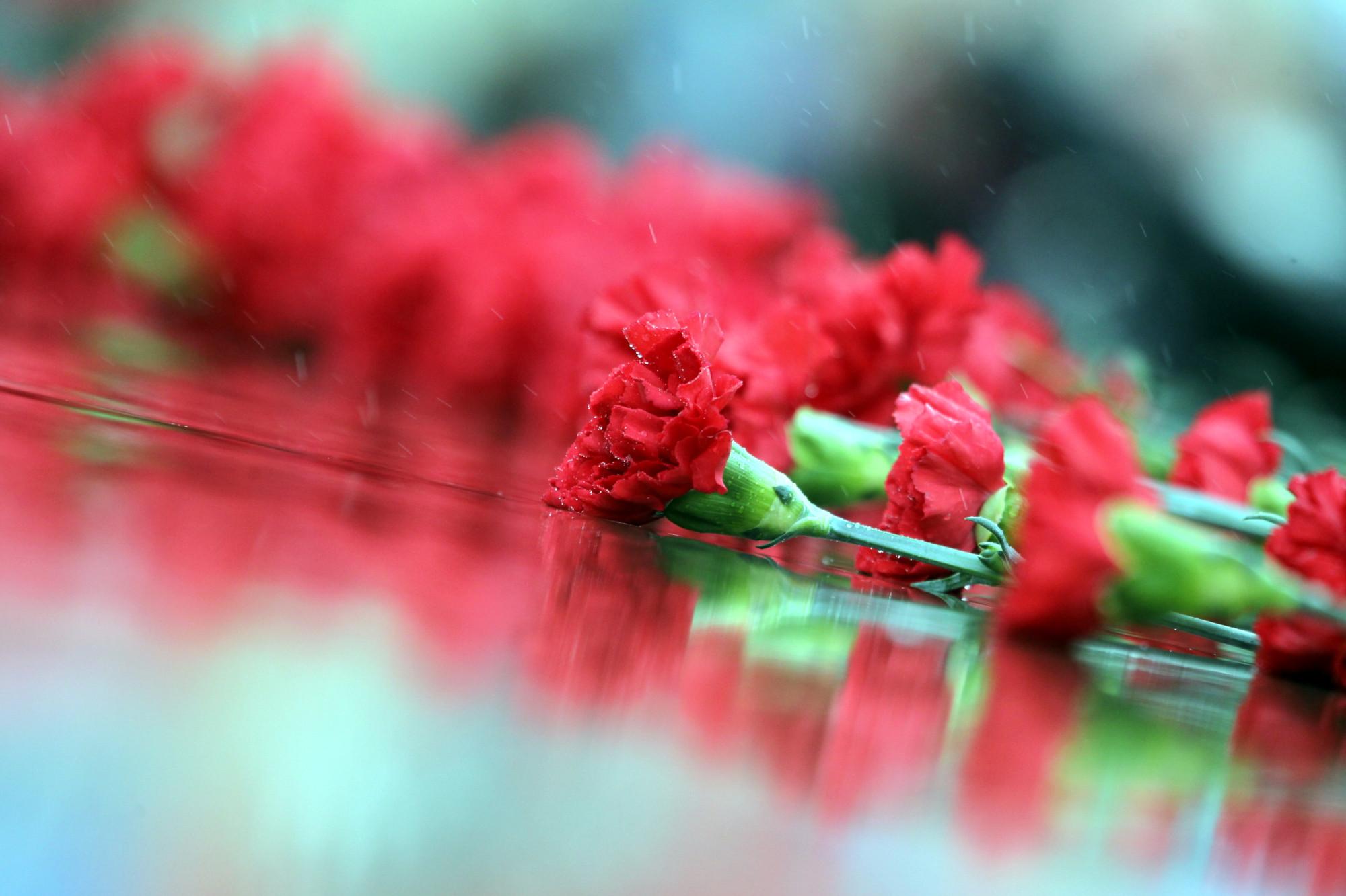 гвоздики цветы память День Победы