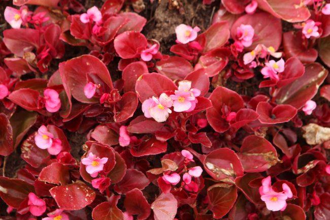 цветы благоустройство