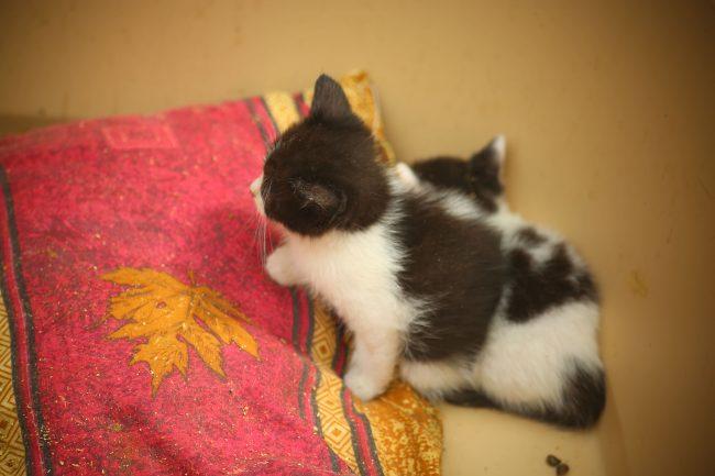 приют пожар МЧС коты собаки кошки