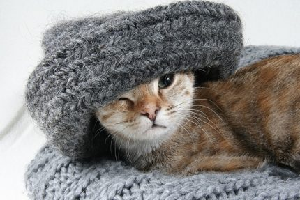 свитер кошка кот шарф
