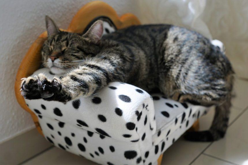 кот, котик, милота, лень, диван