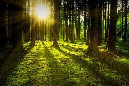 солнце жара лес