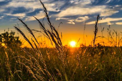 лето солнце жара поле