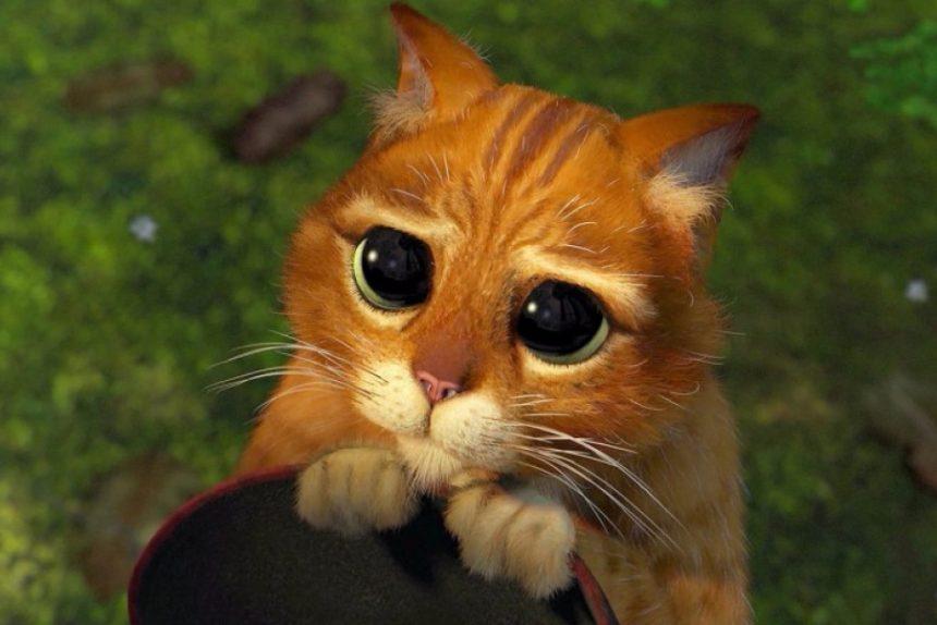 кот, глаза, мимими, кот из шрека, кот в сапогах