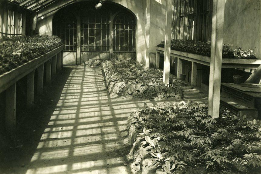 Возрождение Ботанического сада Петра Великого: дикорастущая еда, спасение кактусов и лазарет в оранжереях