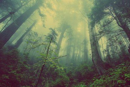 туман лес